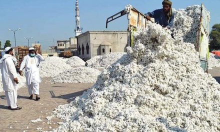 Cotton prices stabilizing with renewed buying interest in Pakistan