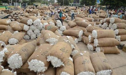 CAI takes steps to boost cotton exports