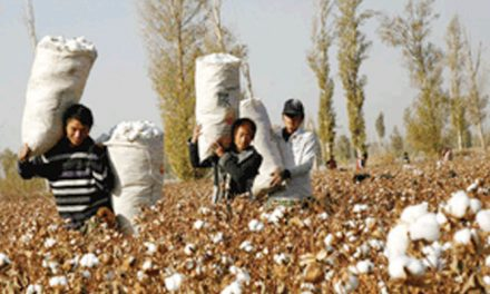 India to produce less cotton than earlier expectations