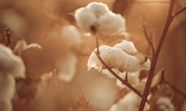 Volatile cotton markets get high