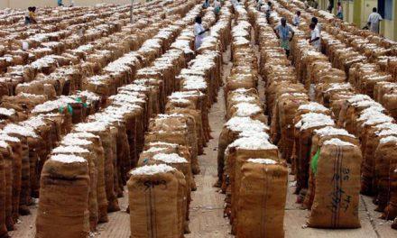 India witnesses good cotton export demand