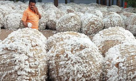 China to buy 5 lakh bales of cotton from India