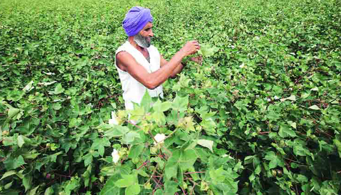 Indian cotton crop production to reach 36 mn bales