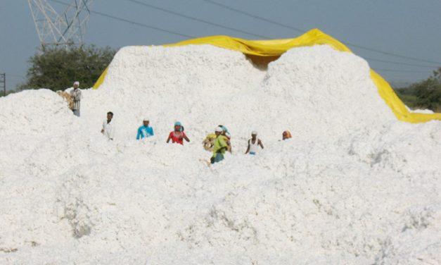 CAI maintains previous cotton estimates in June