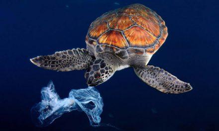 Seaqual showcases latest eco-friendly fabrics at Premiere vision