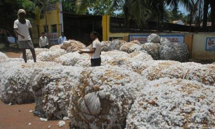 Telangana wants 25 CCI cotton purchase centres