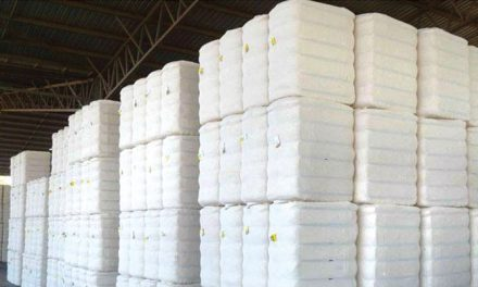 Cotton arrival at ginneries cross 6 mn bales