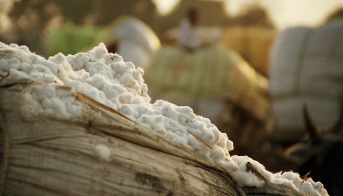 Committee to safeguard future of Egyptian cotton brand