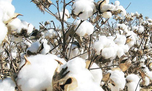 Cotton demand and United States- China trade dispute scenarios