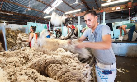 Australian wool market remains dull
