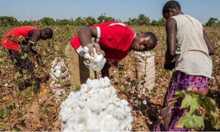 Nigeria targets 300,000 tonne cotton production