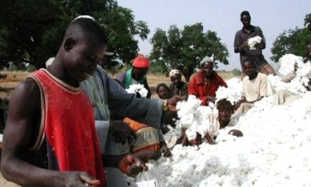 Cameroon to dedicate part of EU budget support to cotton