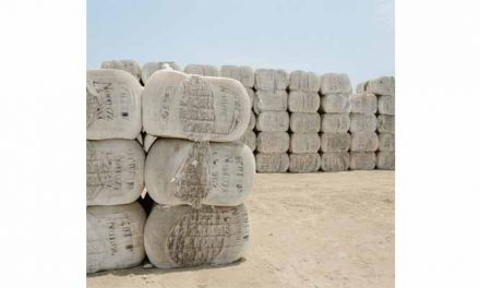 USDA forecasts record world cotton mill usage in 2019-20