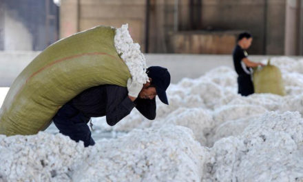 China needs to triple its cotton imports