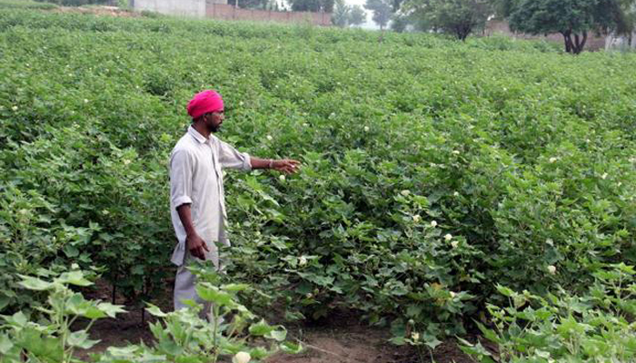 Cotton Corporation of India to enter Punjab