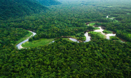 Kontoor committed to preserving forests