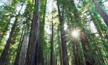 Timberland to plant 50 mn trees around the world