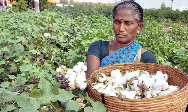 Farmers fast adopting better cotton principles in South India