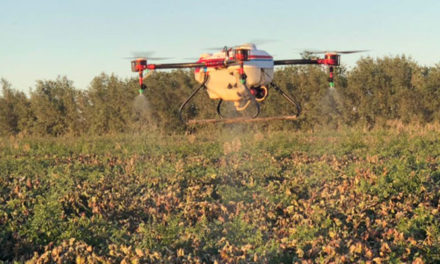 Chinese cotton farmers using drones to spray defoliant