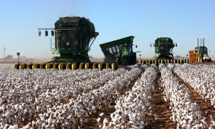 Cotton harvest and lower yields in Texas