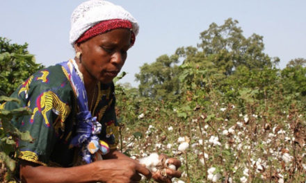 Farmers target 3 lakh MT cotton crop in Nigeria