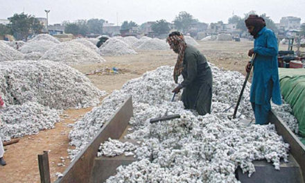 Pak ECC asks for review of tax exemption on cotton seed