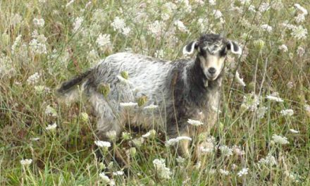 AbTF has developed a new standard created for sustainable cashmere