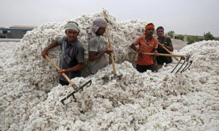 CAI retained cotton projections at 354.5 lakh bales for 2019-20
