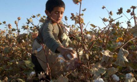 ILO reports fall in forced labour in Uzbek cotton fields