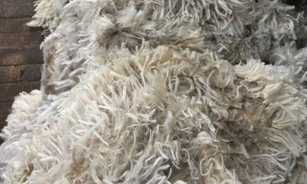 The radical change sale results at Australian wool auctions