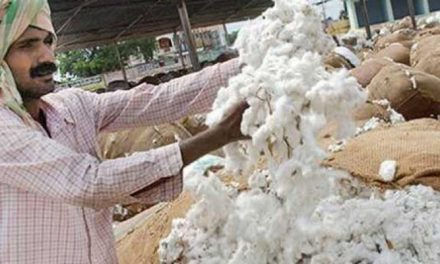 Despite covid-19 fears, cotton procurement to continue at MSP by CCI