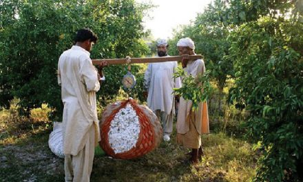To curb cotton loss, Pak offers subsidy on PB rope import