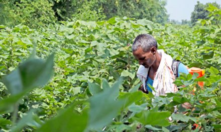 Cotton Demand Needs Enhancement