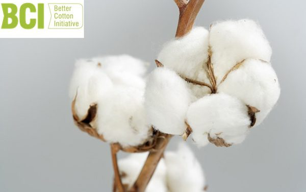 BCI sourced a record 1.7 mn tonnes of its 'Better Cotton' in 2020