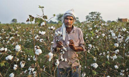 CAI retains 2020-21 cotton crop estimates at 360 lakh bales