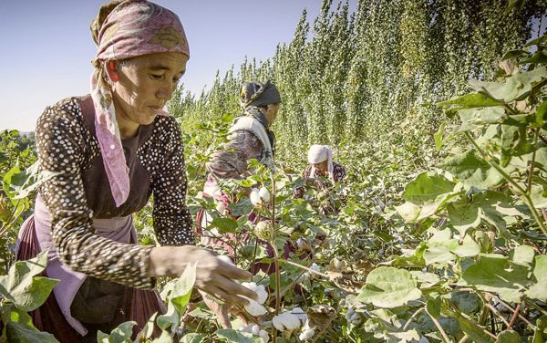 Bestseller pledges to support organic cotton cultivation