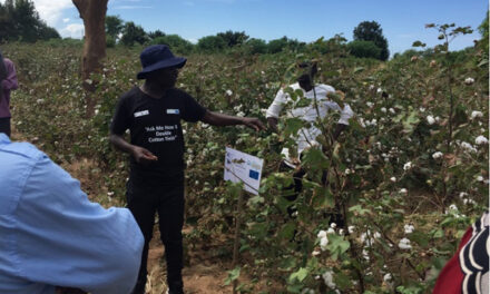 ICAC, ITC sign agreement to double yields of atleast 50,000 Zambian cotton farmers
